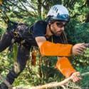 Arborists / Tree workers (21)